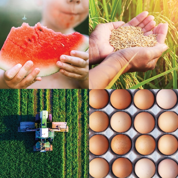 Image of watermelon, wheat, field, eggs